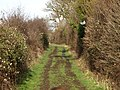 Footpath lined with Hedges - geograph.org.uk - 669111.jpg