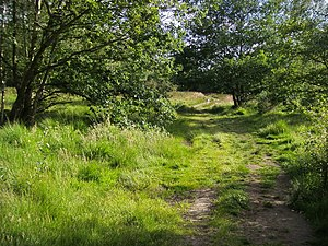 Wimbledon Common - Image: Footpath on Wimbledon Common geograph.org.uk 879675