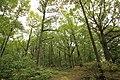 Forêt Départementale de Méridon à Chevreuse le 29 septembre 2017 - 12.jpg