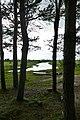 Forêt de pins au bord de la Nerl près de Kideksha (1).jpg