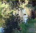 Ford Park, Sunrise Swim, Redlands, CA 7-12 (7747345402).jpg
