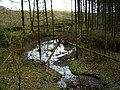 Forest Flooding Near Park Burn - geograph.org.uk - 354682.jpg