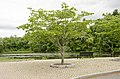 Forest Park, Springfield, MA 01108, USA - panoramio (19).jpg