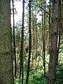 Forest above Rhewl - geograph.org.uk - 206753.jpg