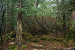 Forest in Yakushima 50.jpg