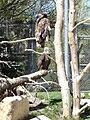 ForestryFarm-BaldEagle.jpg