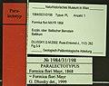 Formica flori NHMW1984-31-198 specimen tags.jpg