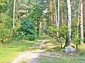 Forst Grunewald - Waldwegkreuzung (Grunewald Forest - Woodland Path Junction) - geo.hlipp.de - 41349.jpg