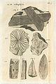 Fossils on Plate 5 of Lythophylacii Britannici Ichnographia.jpg