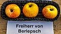 Freiherr von Berlepsch jm55173.jpg