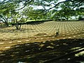 Friedhof - panoramio (86).jpg
