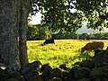 From Castlerigg with Derwentwater glimpsed in the distance. - panoramio.jpg