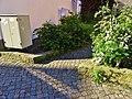 Frongasse, Pirna 120449338.jpg