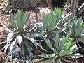 Gardenology.org-IMG 2358 hunt0903.jpg