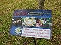 Gardenology.org-IMG 7120 qsbg11mar.jpg