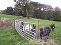 Gateway to field of Donkeys at Wester Lochgreen - geograph.org.uk - 263818.jpg