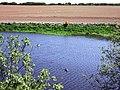 Geese on reservoir - geograph.org.uk - 421571.jpg
