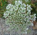 Gfp-white-flowers.jpg