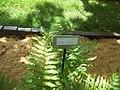 Giardino botanico di Brera (Milan 04.jpg