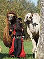 Girl ^ camels - Flickr - Stiller Beobachter.jpg
