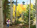 Girls Hiking in Aspens, Mosca Pass, Great Sand Dunes National Preserve (12660113605).jpg