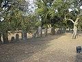 Goni - Parco archeologico Pranu Mattedu - panoramio.jpg