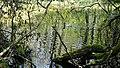 Gräsand i den lilla dammen.jpg