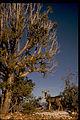 Grand Canyon National Park GRCA2717.jpg