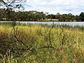 Grasses and Lake - panoramio.jpg