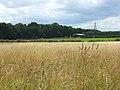 Grassland, Great Kingshill - geograph.org.uk - 936288.jpg