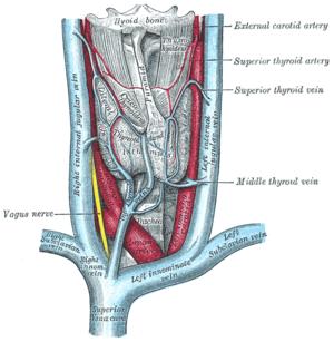 Schema artere sous claviere