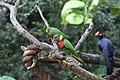 Green Birds (2899457623).jpg