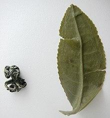 фото зелёный