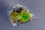 Greening Ascension Island.jpg