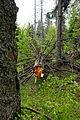 Großen Schachtenwanderung ab Buchenau im Nationalpark Bayerischer Wald 06.JPG