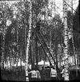 Grokhovskiy Regiment. Fragments of dry twigs.JPG