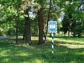 Group of old oaks (Cherkasy region)-1.jpg