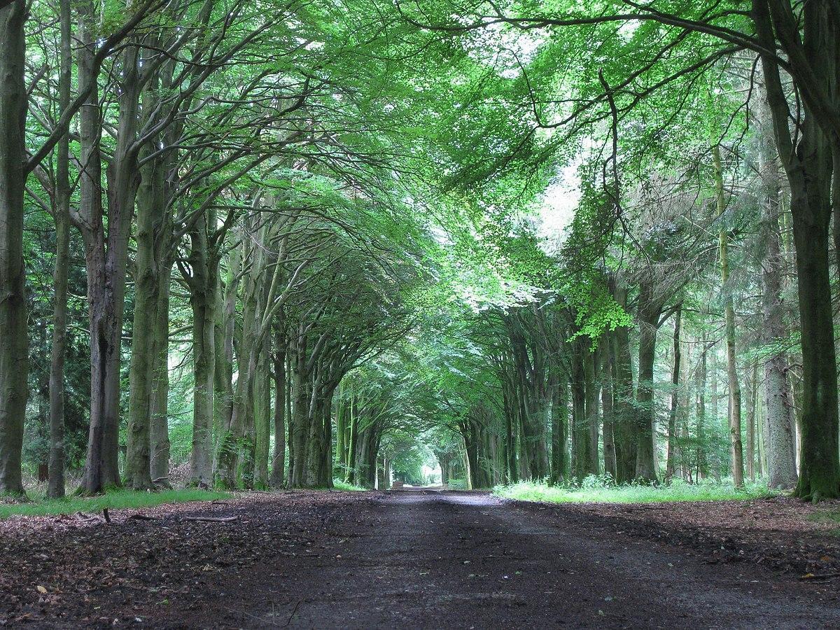 Roman avenue woods