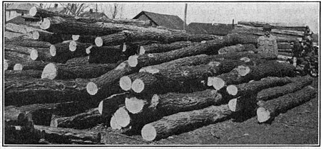 Growing black locust trees - Wikisource, the free online library