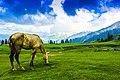 Gulmarg, Kashmir.jpg