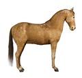 Häst. Andalus utan sadel frilagd - Skoklosters slott - 85933.tif