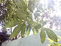 HK 西營盤 Sai Ying Pun 第三街遊樂場 Third Street Playground 公園 LCSD park green plants n trees August 2017 Lnv2 16.jpg