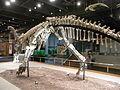 HK TST Science Museum Bones exhibit 02 恐龍 dinosaur.JPG