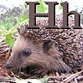 H is for Hedgehog.JPG