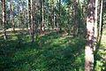 Hablingbo 136-1 - KMB - 16001000152244.jpg