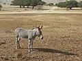Hai Bar Yotvata Nature Reserve Tour 06.jpg