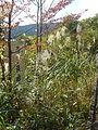 Hakone Ashinoko lake dsc05544.jpg