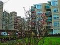 Harderwijk - Drielanden - Bachdreef - Spring 2010 - View WSW.jpg