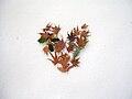Heart of leaves in snow.JPG