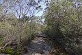 Heathcote NSW 2233, Australia - panoramio (60).jpg